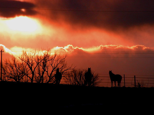 horse nature silhouette wow amazing distillery breathtaking justclouds camfire mywinners abigfave perfectsunsetssunrisesandskys naturessilhouettes landscapesofvillagesandfields coloradothunderstorms breathtakinggoldaward naturescreations camfirephotos camfirepics breathtakinghalloffame