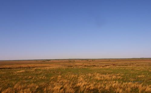 florida savannah prairie paynesprairie