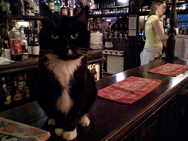 The cat in my local pub in London