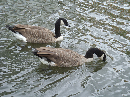 London Canal stroll (68): caught drinking! width=
