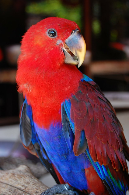 burung kakak tua | gambar diambil sewaktu berkunjung ke Tama ...