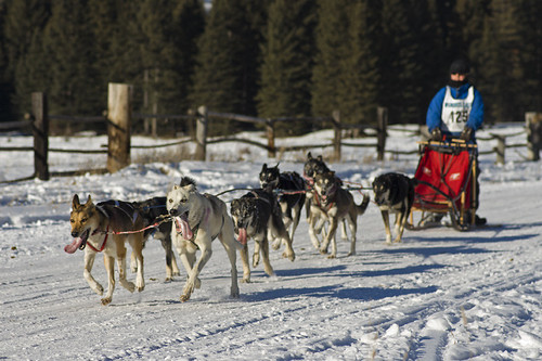 3217391412 f89eca590a Nice Sled Dog Racing photos