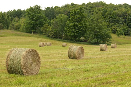 ontario canada farm line diagonal round hay bales eight creemore ourdailychallenge