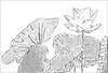 Lotus Flower Sketch Black & White- IMGP0071 Lotus Flower Sketch