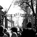 Small photo of Arbeit Macht Frei (Entering Auschwitz)