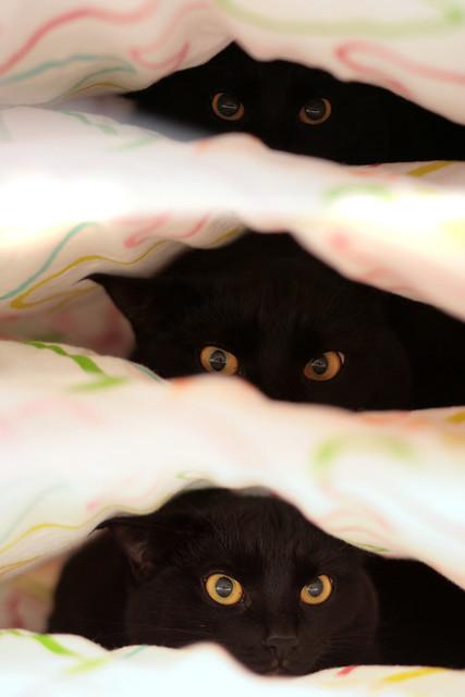 Bolka under quilt - peek-a-boo x3