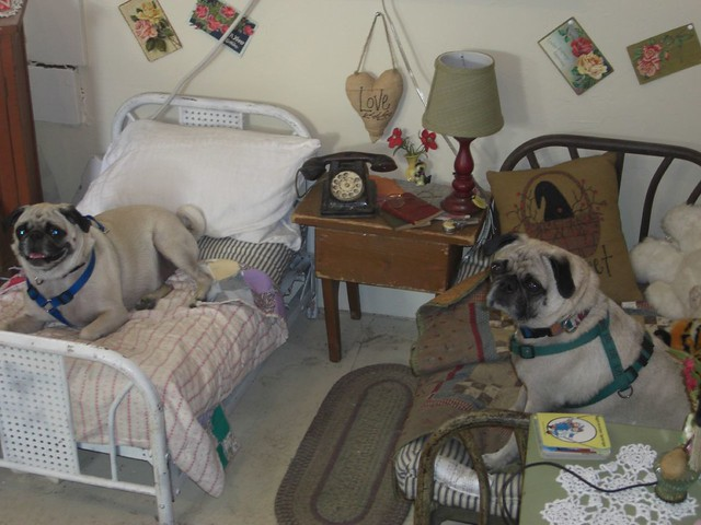 Antique Dog Bedroom Set Dogs Not Included Comfort Tx Flickr Photo Sharing