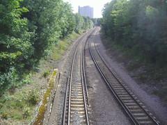 Sutton line