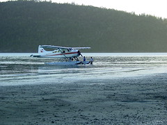 aviation, airplane, wing, vehicle, sea, seaplane,