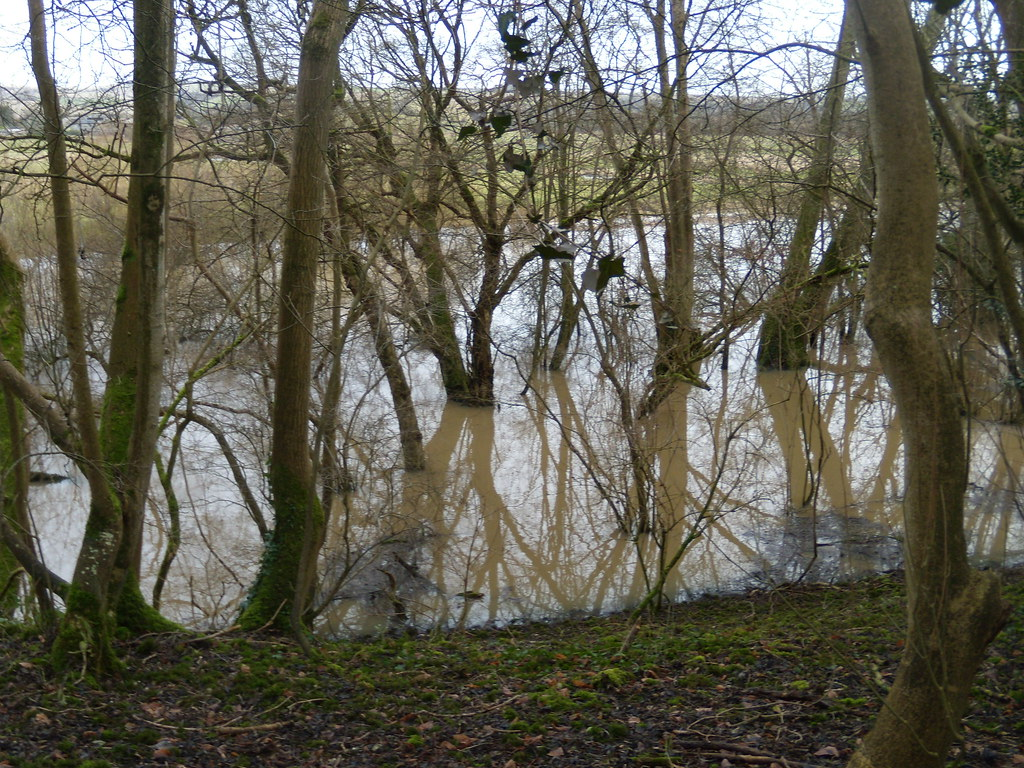 Flooded trees Arundel Circular
