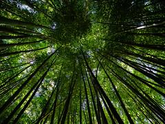Chattanooga Bamboo