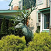 An Elk is Loose in Lambertville