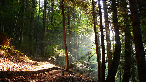Eclaircie forestière