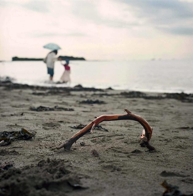 A driftwood