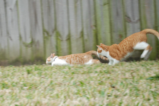 Header of cat chase