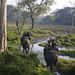 Elephant Ride at Jaldapara Wildlife Sanctuary! by JKDs