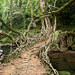 Living Root Bridge - by Soumya Menon by Pratham Books