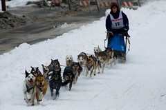 2300304412 99b651e81c m Where is the best place to live in Alaska, where you can do sled dog racing?