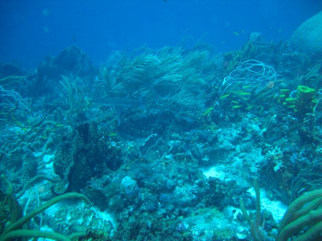 Underwater seascape off Little Tobago, Tobago | Flickr ...