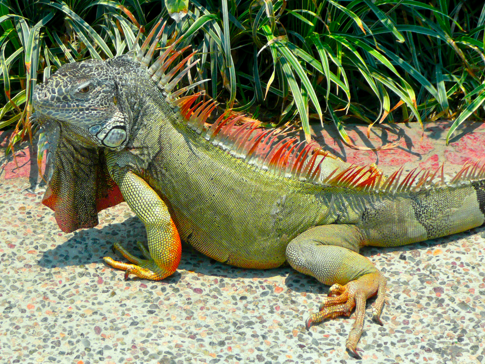 Reptile Center Informationt: Significant Insights about ...