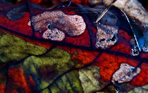 color virginia fdsflickrtoys creeper abingdon utterlysurreal