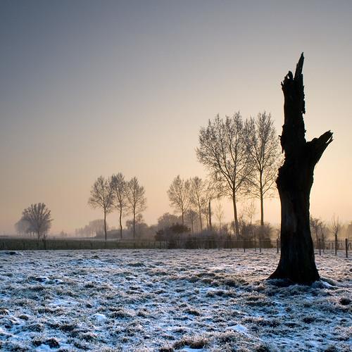 winter house snow tree digital sunrise dawn frost belgium stump 2009 beveren stevenhouse houselightgallery