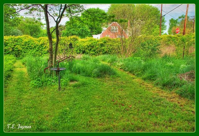 backyard certified wildlife habitat flickr photo sharing