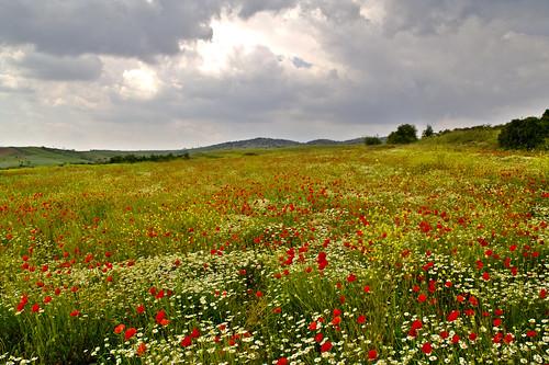 nature field clouds geotagged poppies wildflowers interestingness143 i500 impressedbeauty geo:lat=40795748 geo:lon=23131843