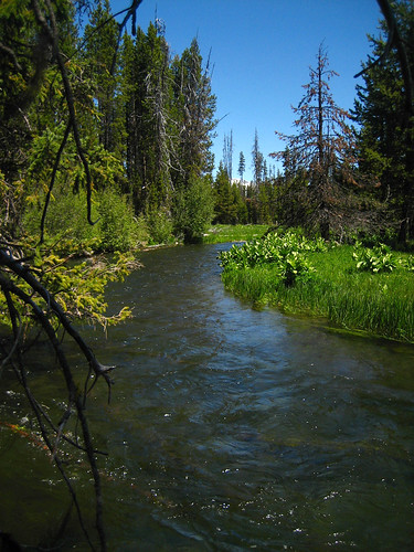 Central oregon fly fishing report little lava deschutes for Central oregon fishing report