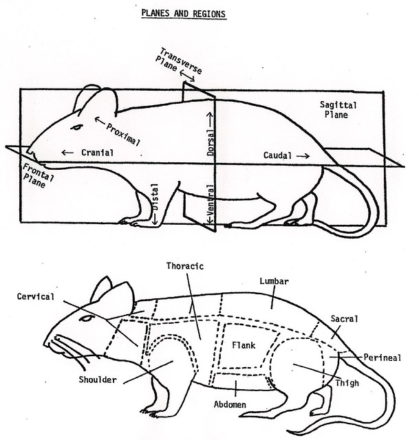 mouse-diagram