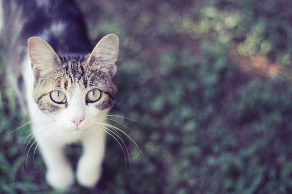 curiosity doesn't always kill the cat...