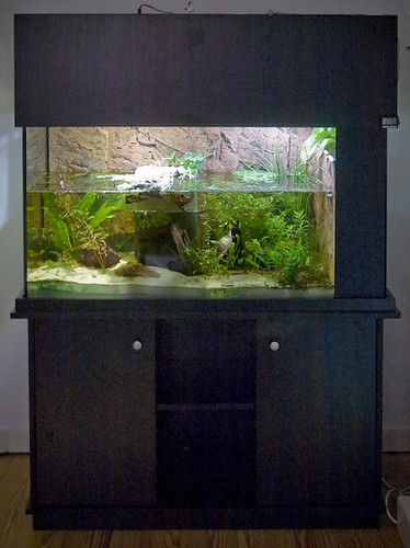 Turtle Tank / Schildkr?tenaquarium Flickr - Photo Sharing!