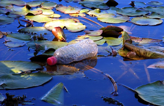 plastic bottle in pond