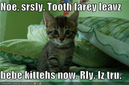 -tooth-fairy-leaves-kittens-now