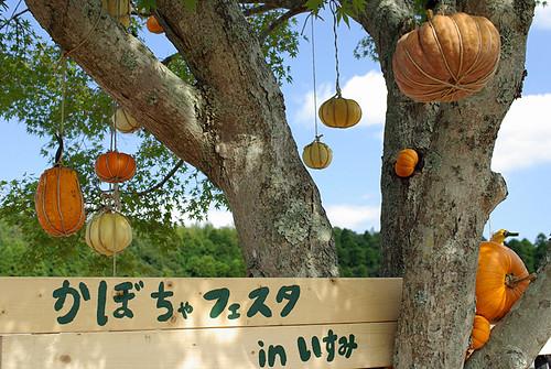 kabocha-Festa 2008-01
