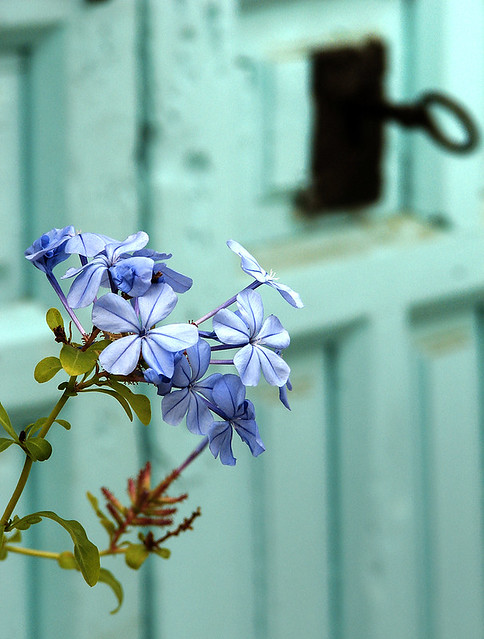 La llave de tu flor - The key of your flower.