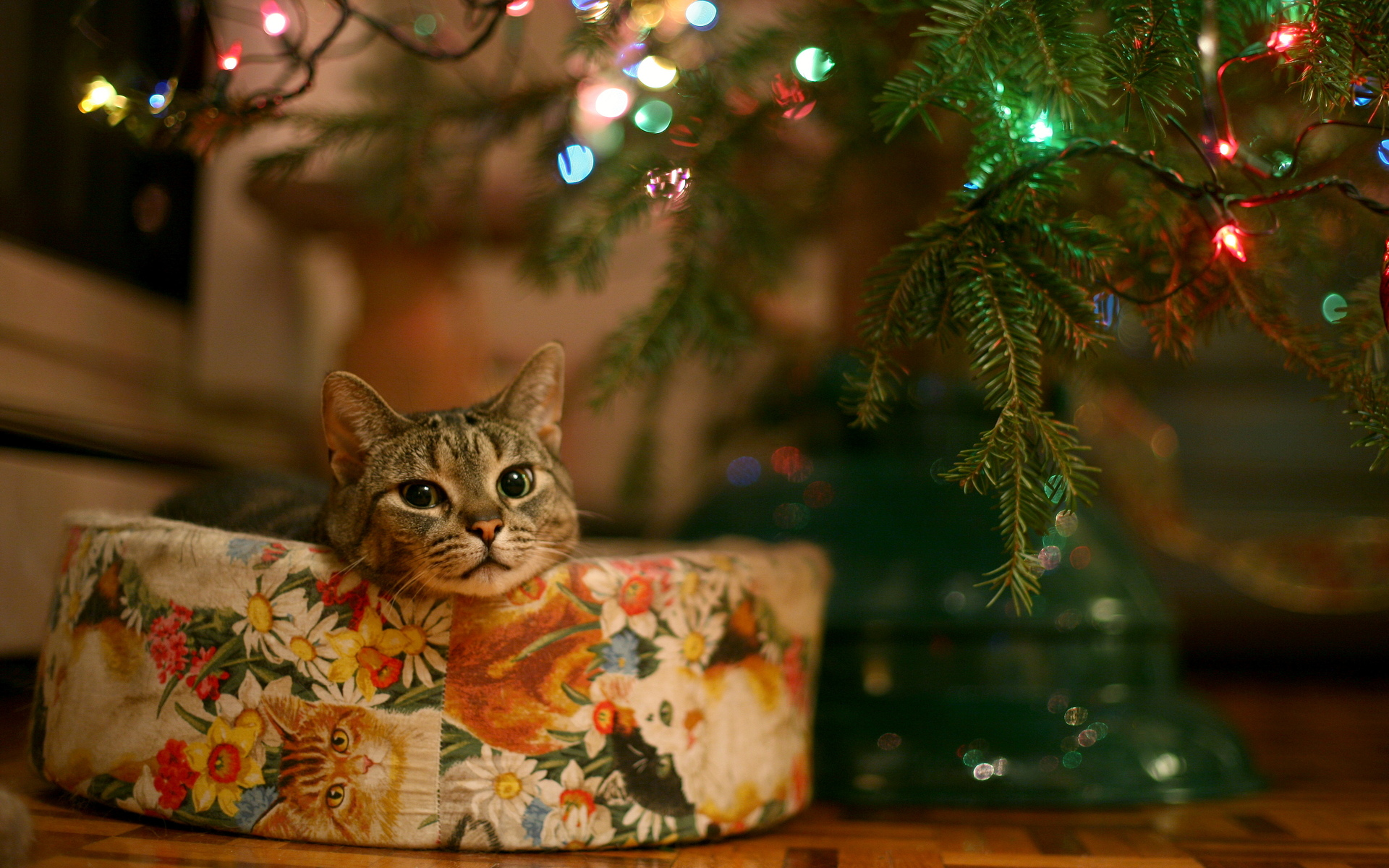 Christmas cat cute wallpapers Christmas tree cat tower