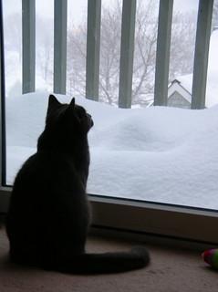 watching it snow