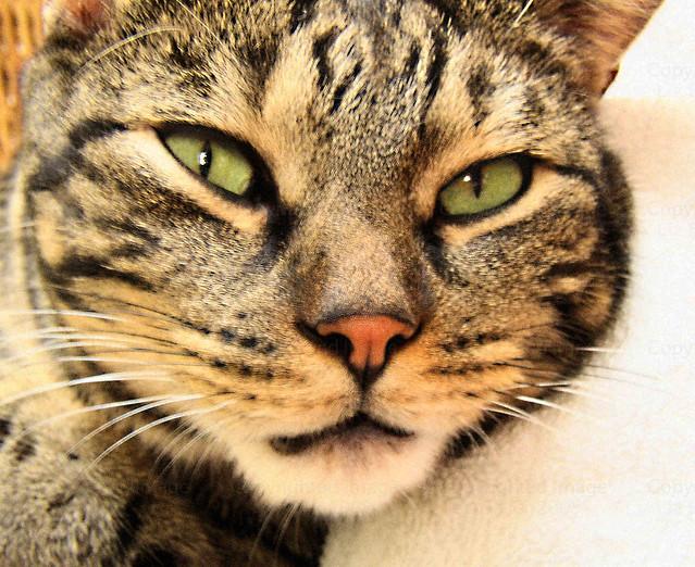 Green tiger eyes - photo#6