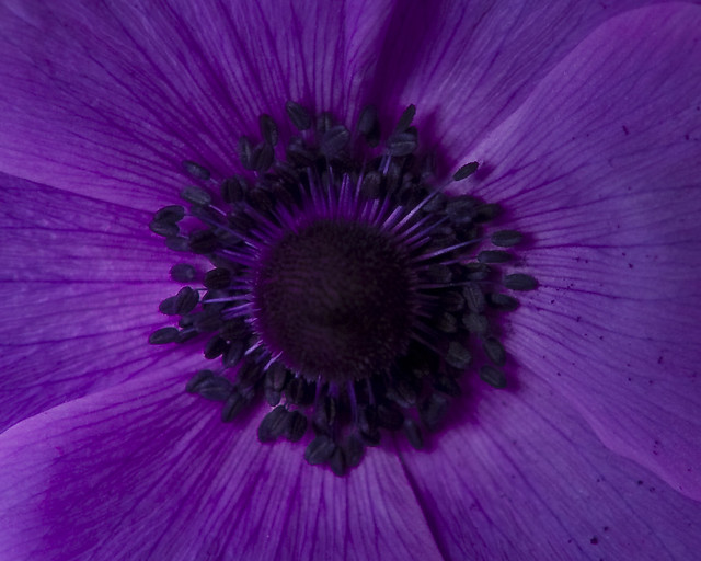 Up Close and Purple