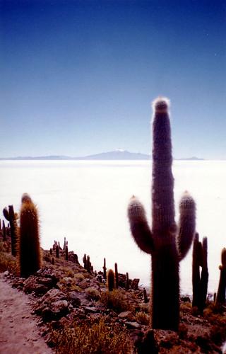 Bolivia. Uyuni salt pan. Cactus and salt