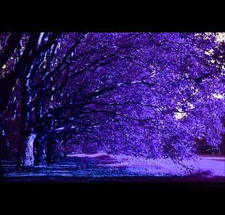 Trees manipulated (explored #46, 19.09.2008)