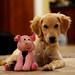 My Friend Pig by kellygifford
