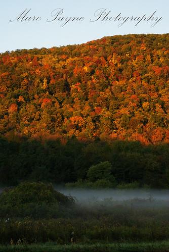 autumn trees red orange newyork color tree fall leaves yellow leaf october vibrant sony foliage alpha dslr a200 minoltaamount sonyalphadslra200