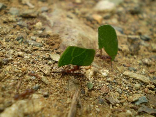 Debate de interes para huerto y jardin for Hormigas en el jardin
