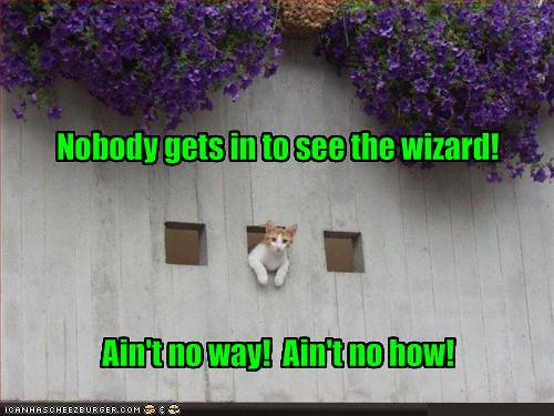 funny-pictures-cat-stops-you-from-seeing-the-wizard