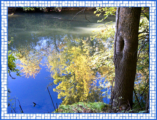 Reflections In The Tualatin River