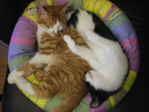 Photo:YIN AND YANG CATS By:jimmiehomeschoolmom