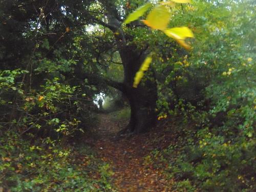 Up a bridleway