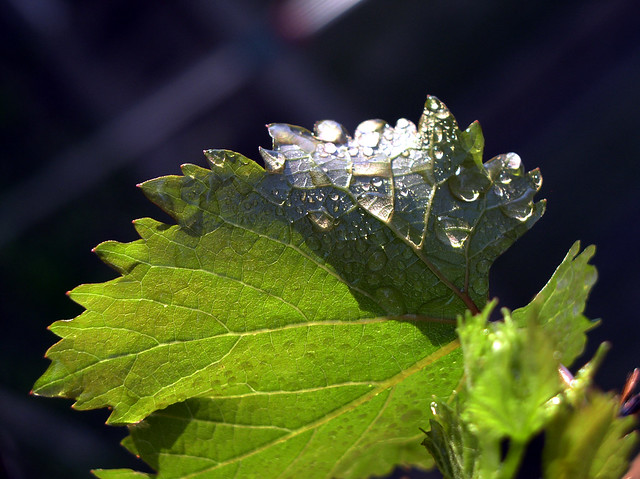 raindrops flickr photo sharing